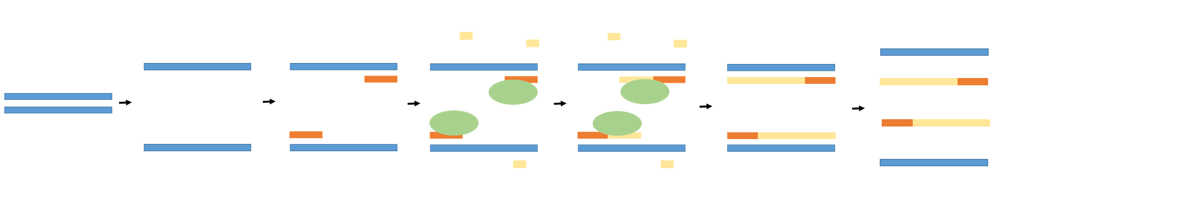 Double stranded DNA is heated and denatures into single stranded DNA. A primer (orange) then binds to the end of the target sequence. The enzyme taq polymerase (green) then binds to the primer sequence and attaches dNTPs (yellow) by base pairing to lengthen the primer DNA. The process continues through use of thermal cycling to continue copying the target sequence.