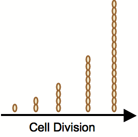 File:Expcellgrowth.png