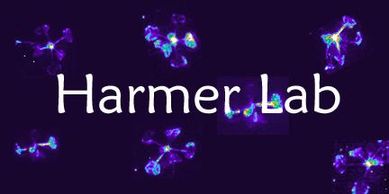 File:Lab image taller.png