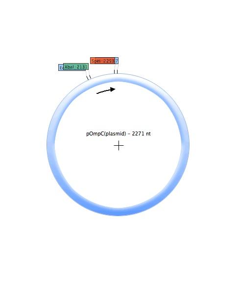 File:POmpC (plasmid).jpg