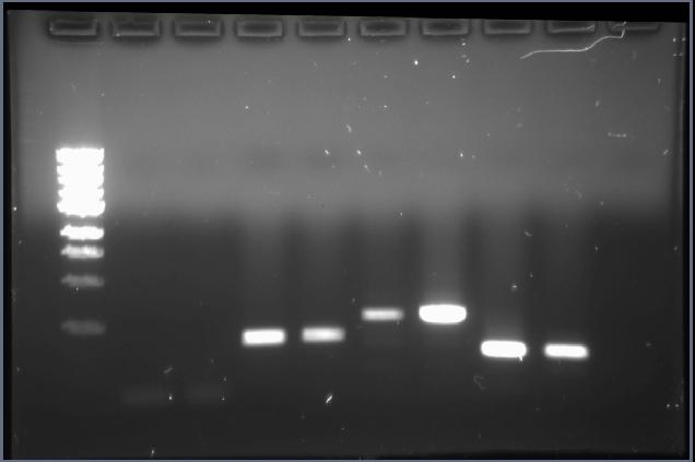 UIUC 7.13.10 2pm PCR ArsR, ArsR-F, pArsR.jpg