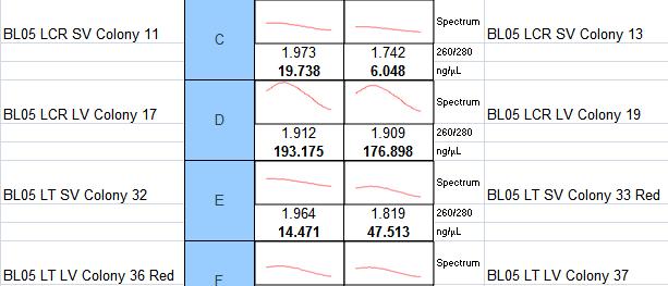 File:02-02-2014 streak plate minipreps.PNG