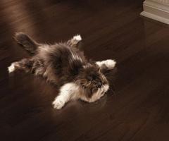 File:CAT3.jpg