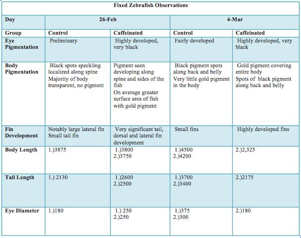 File:Fixed Zebra Fish Observations.png
