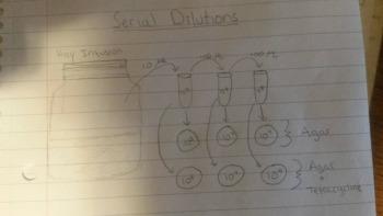 OWW serial dilutions2.jpg
