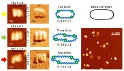 File:BM12 nanosaurs AFM Blob model800 s.jpg