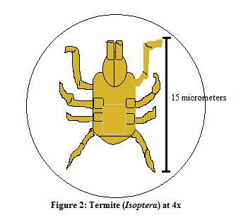 File:Termite.png