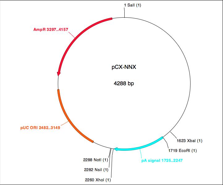 File:109-BPE-pCX-NNX.png