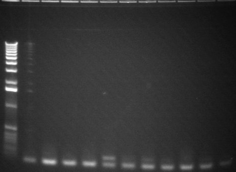 8-6 pcr fifth 11 from back.jpg
