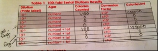 Image:Table 1 Serial Dilutions Results.png