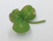 File:Plant51.jpeg
