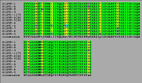 Subject 12 boxshade - avm - biol368.png