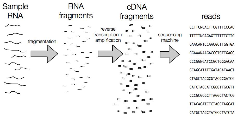 Steps of RNA-seq experiment