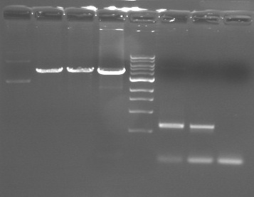 agarose gel electrophoresis lab report To separate dna using agarose gel electrophoresis, the dna is  or when  young students are performing an experiment, a less toxic dye may.