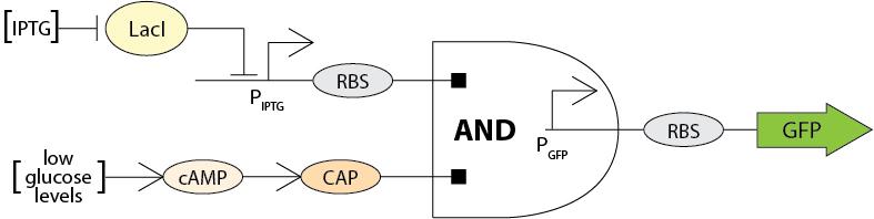 File:Circuit diagramTEAM3.jpg