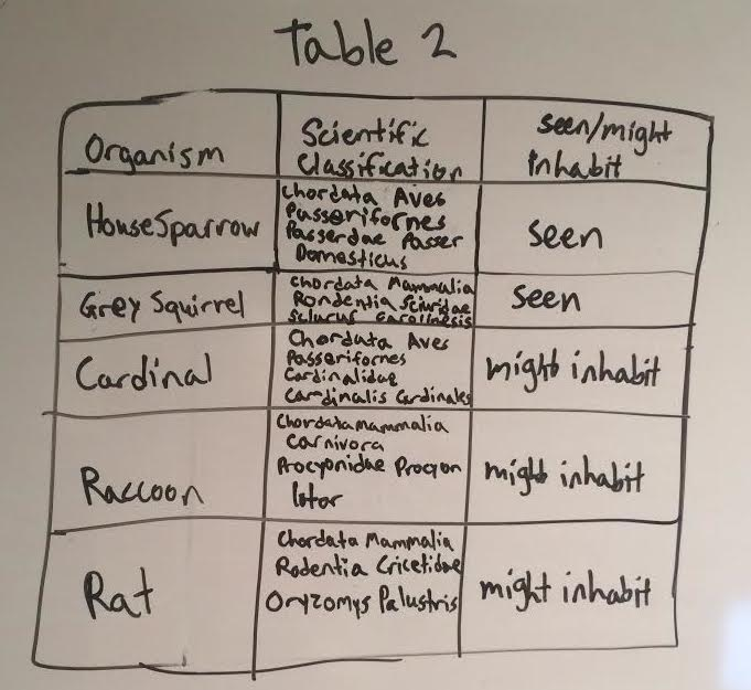 Vertabrate table.jpg