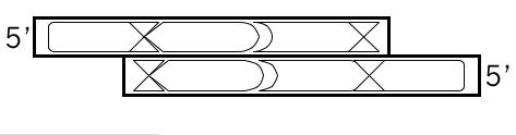 schematic for oligonucleotide pair