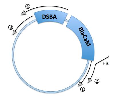 File:Harvard BioDesign PCR 6-11-2013.png