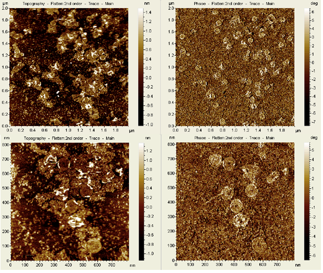 Fig. 16. AFM images of the dome DNA origami using liquid tapping mode. The upper row and lower row are at two different scanning areas of different size making the lower images more close-up.