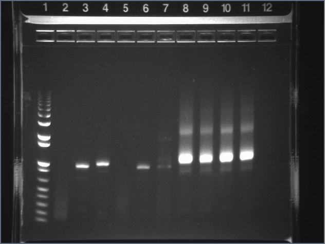 072707 Voigt PCR 1 fail.jpg