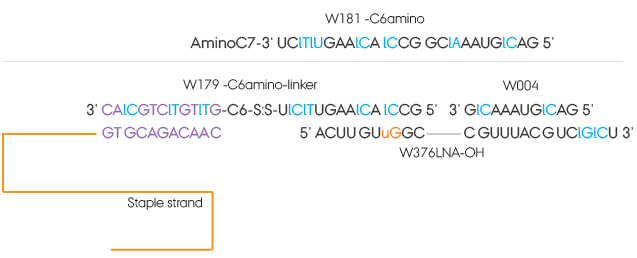 Figure S54. Detailed structure and sequences of the sisiRNA. W179-C6amino and W004 comprises the sisiRNA sense strand and W376LNA-OH is the antisense strand. W181-C6amino shown topmost is the sense strand without the knick. Black colored letters marks nucleobases of RNA, blue colored letters marks nucleobases of DNA and purple is LNA marked by the prefix l. The orange uG is a guanine with an unlocked base.