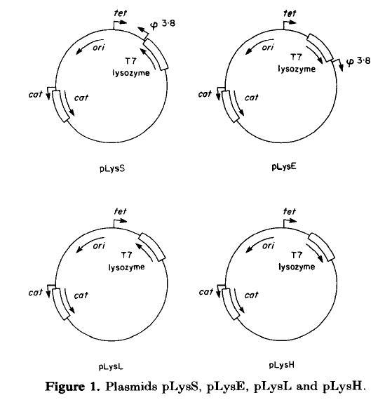 File:T7lysozymeplasmids.jpg
