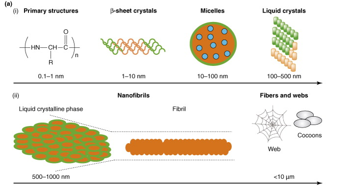 Figure 2. The structures of spider silk into many different compositions. Source