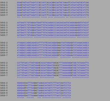 File:MSA S6 DNA.png