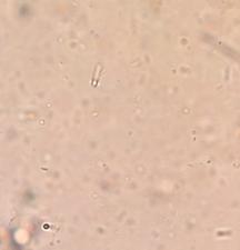 File:Organism5.PNG