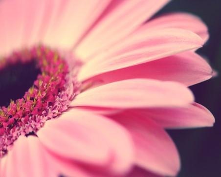 File:Flower123.jpg