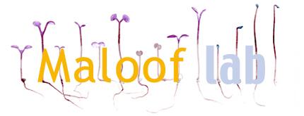 File:Logo2 final.jpg