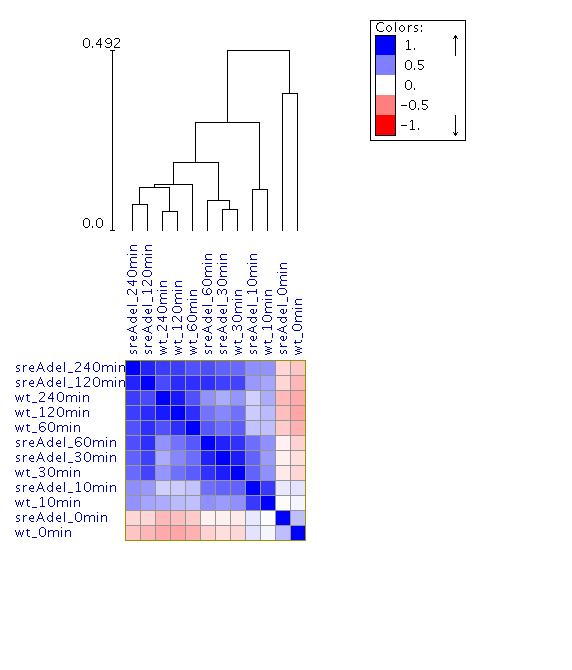 Spearman correlation Heatmap