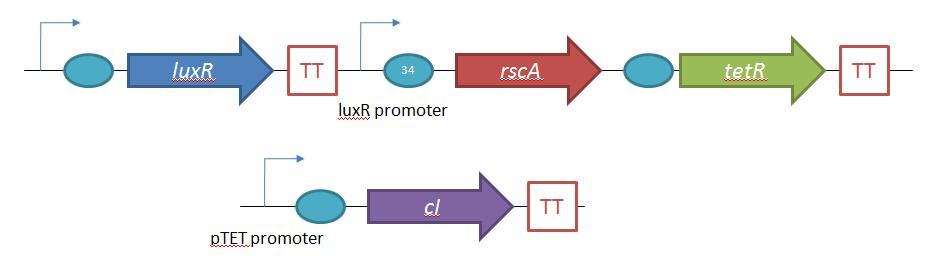 Design for the control system for control of lambda phage lysogenic/lytic life cycles.