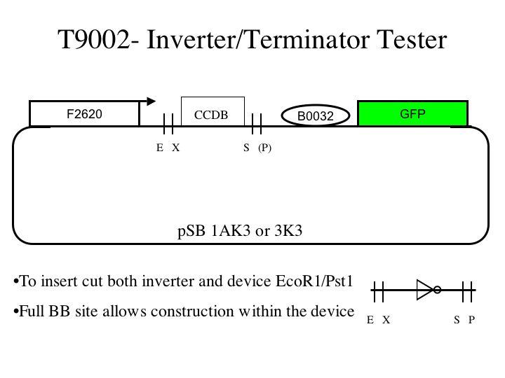 File:T9002.1.jpg