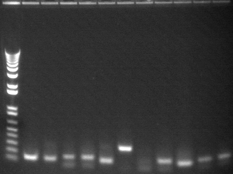 8-6 pcr nineth 11 from back.jpg