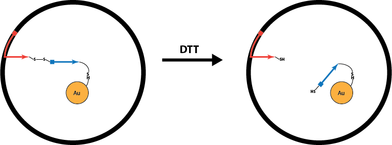 File:Disulfide linker for solubilization.png