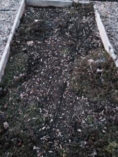 File:Plant JK4.jpg