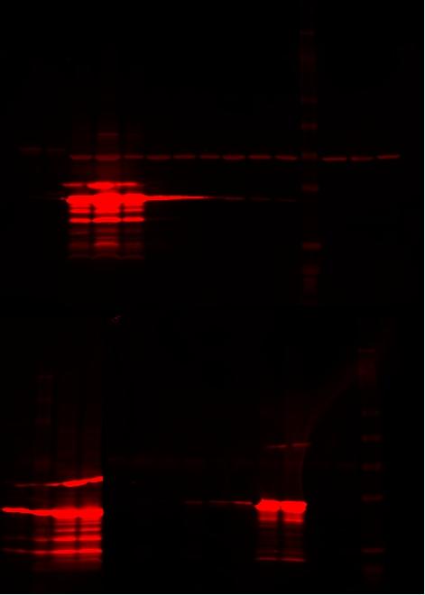 2008-03-18 2.jpg