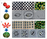 Hydrogel microcapsules folded following and origami pattern[I]