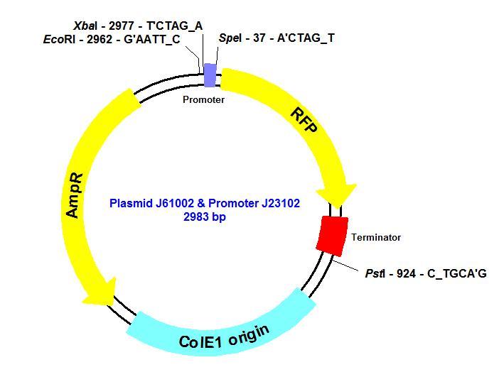 File:Plasmid J61002.jpg