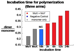File:MoAY poly time.jpg