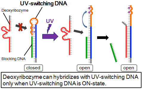 UV-switching system.png