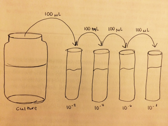 File:Dilutiondiagram.jpg