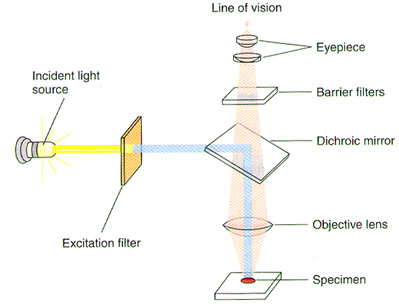 Microscope Optical Transmission.jpg