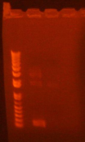 PCR 9-14-10b.jpg