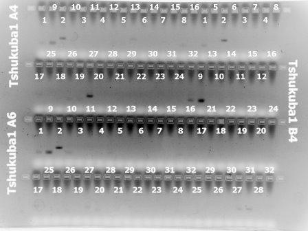 File:5Mar'10 Tsukuba(A4,A6,B4)2.jpg
