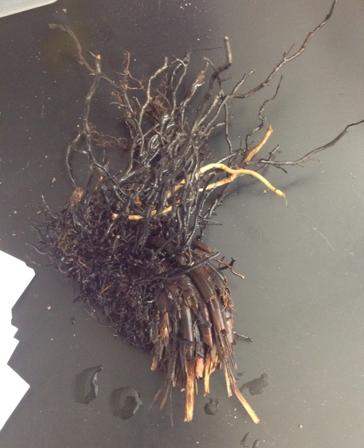 File:Plant6katrina.jpg