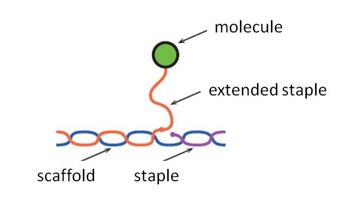 File:Biomod-2012-UTokyo-UT-Hongo-Design-ExtendedStaple ver1.2.jpg