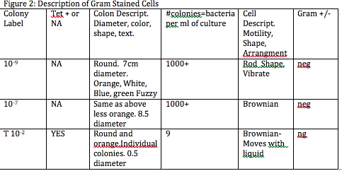 enzyme and conclusion gram stain Isolation and identification of two bacterial unknowns hence the counter stain safranin has no action on gram of the enzyme cytochrome oxidase (gram.