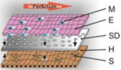File:Microfluidics.jpg